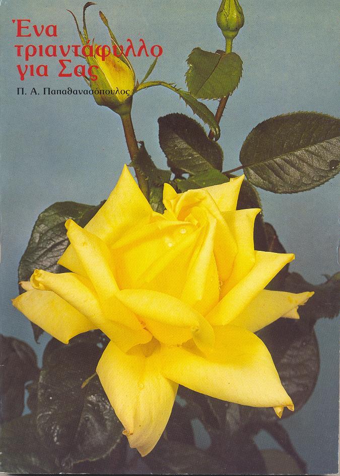 Ένα Τριαντάφυλλο Για Σας