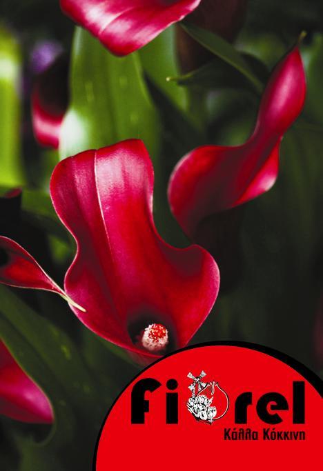 Κάλλα Κόκκινη 14/+ Fiorel Ολλανδίας  σε Φάκελο